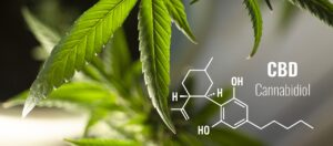 What is CBD Hemp Oil? || What is cannabidiol oil for? -- hemp leaves